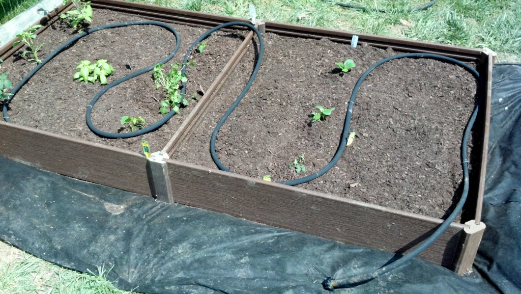 Raised bed garden with soaker hose installed